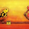 diversita_uccelli